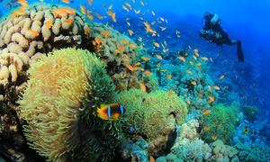 Punto Sub: Corso di sub Scuba Diver con lezioni teoriche e immersioni in mare. Valido in 2 sedi (sconto fino a 90%)