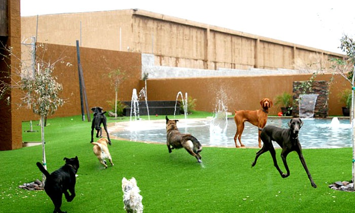 Always Unleashed Pet Resort - North Scottsdale: Dog Daycare for Breeds Under or Over 10 Pounds or Overnight Boarding at Always Unleashed Pet Resort (Half Off)