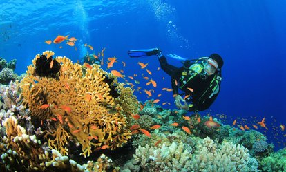 $156 for PADI Open-Water <strong>Scuba</strong> Certification with Equipment Rental at Aquarius Dive Shop ($649 Value)