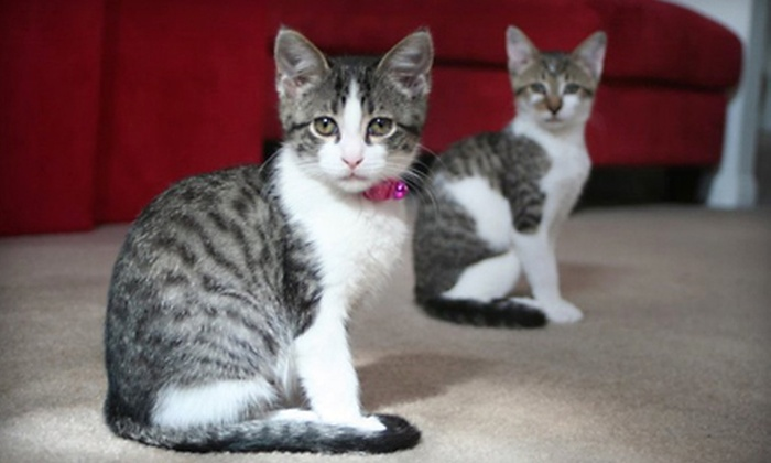 Lollypop Farm, Humane Society of Greater Rochester - Multiple Locations: Adoption Fees for Rabbit, Cat, or Dog at Lollypop Farm, the Humane Society of Greater Rochester in Fairport (Up to 71% Off)