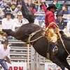 Professional Roughstock – Up to 52% Off Rodeo Event