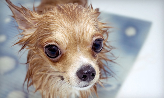 Bubbles N' Barks - Saint Clair Shores: Full-Service Spa Grooming Package and Teeth Cleaning for a Small, Medium, or Large Dog at Bubbles N' (Up to 54% Off)