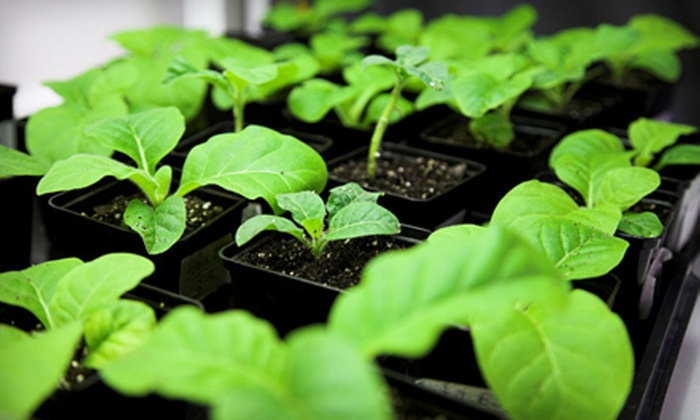 ECHO's Tropical Fruit Nursery - North Fort Myers: $10 for $20 Worth of Plants and Gardening Supplies at ECHO's Tropical Fruit Nursery