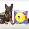 $34 for a Varsity Ball Indestructible Dog Toy