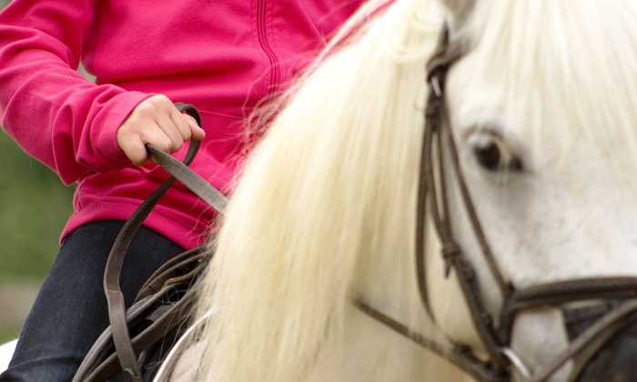 Saxton Equestrian - Wilton: One or Four One-Hour Private Horseback Riding Lessons at Saxton Equestrian (Up to 59% Off)