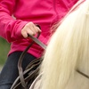 Up to 59% Off Riding Lessons at Saxton Equestrian
