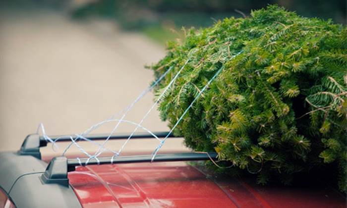 Ballyntyne Tree Farm - Salem: $10 for $20 Toward a U-Cut Christmas Tree at Ballyntyne Tree Farm