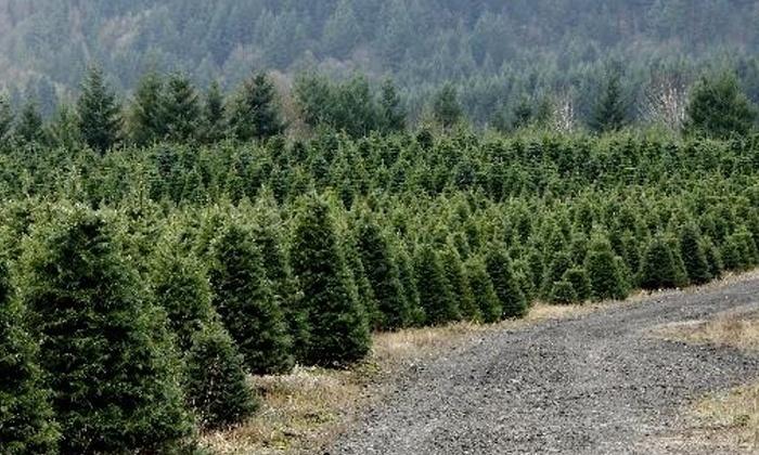 Mitchell Christmas Tree Farm - North Plains: $22 for a Grand Fir Christmas Tree at Mitchell Christmas Tree Farm ($40 Value)