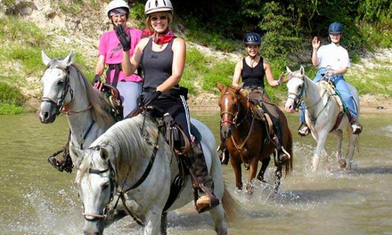 Trail-Ride Experience for Two, Four, or Six at Cypress Trails Equestrian Center (Up to 50% Off)