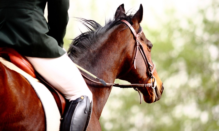 Winward Equestrian - Colts Neck: One or Two One-Hour Private English Horseback Riding Lessons at Winward Equestrian (Up to 53% Off)
