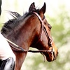 Up to 53% Off Private English Horseback Riding Lessons