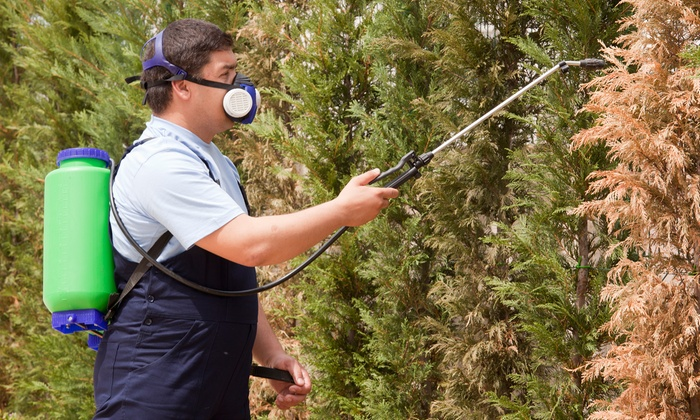 Mosquito Joe - Fort Myers / Cape Coral: $49 for $89 Worth of Pest-Control Services — Mosquito Joe of Cape Coral