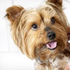 50% Off Dog-Grooming Services with a Facial