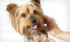 Furry Tails: Grooming for Small, Medium, or Large Dog, or Half- or Full Day of Doggy Day Care at Furry Tails (Up to 54% Off)