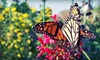 South Texas Botanical Gardens & Nature Center - South Side: Admission for Two, Four, or Six to South Texas Botanical Gardens & Nature Center (Up to Half Off)