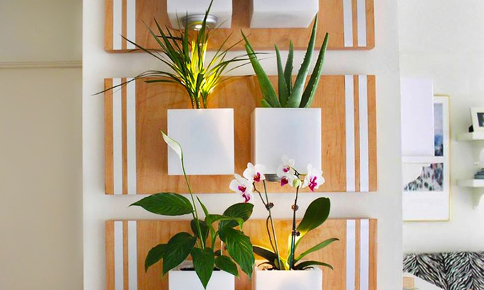 Flora Wall Design - Los Angeles: $39 for a 60-Minute Living Green-Wall Consultation from Flora Wall Design ($190 Value)