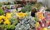 Fresh Ideas Flower Company - Modesto: $20 for $40 or $40 for $80 Worth of Bulk Flowers at Fresh Ideas Flower Company