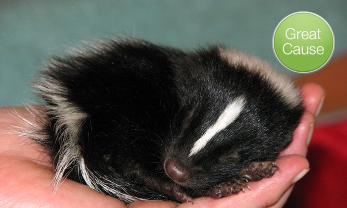 Wildlife Rescue Aid Project: $10 Donation to Help Care for Baby Skunks