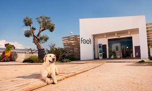 Foof: Ingressi al primo museo del cane Foof per adulti e bambini da 3,99 €