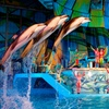 SeaWorld San Antonio – Up to 54% Off a Marine-Park Visit