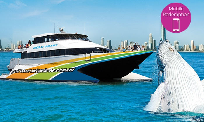 GC Adventures - Whale Watching - Main Beach: Morning Whale Watching Adventure for One Child ($29) or Adult ($59) with Whale Watching Gold Coast (Up to $99 Value)