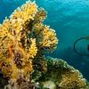 51% Off Scuba Certificate Course at Sonoma Coast Divers