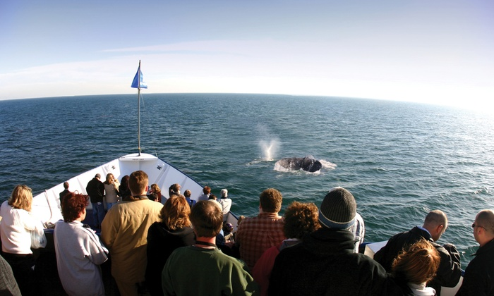 Hornblower San Diego - Embarcadero: Whale and Dolphin Watching Adventure for Two, Four, or Six from Hornblower Cruises & Events (Up to 37% Off)