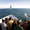 Hornblower Cruises & Events – Up to 39% Off Whale Watching
