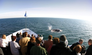 Hornblower San Diego: Whale and Dolphin Watching Adventure for Two, Four, or Six from Hornblower Cruises & Events (Up to 37% Off)