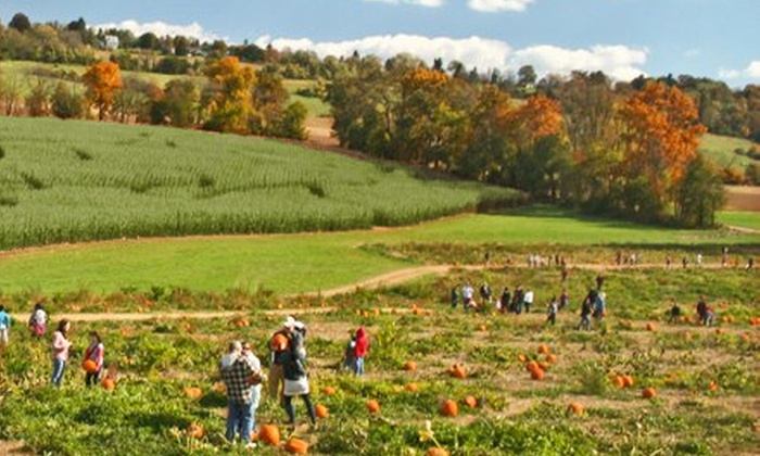 Jumbo's Pumpkin Patch - Middletown: Corn-Maze Outing for Four or Two on Saturday–Sunday or Friday at Jumbo's Pumpkin Patch (Up to 50% Off)