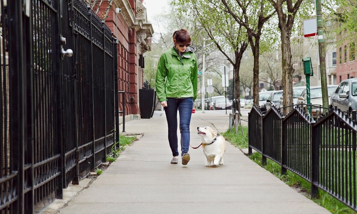 Dog Fit Unlimited - San Jose: Two or Four 30-Minute Dog Walks from Dog Fit Unlimited (Up to 75% Off)