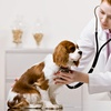 Up to 55% Off at Yardville Animal Hospital