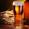 Half Off Beer-Brewing and Winemaking Packages