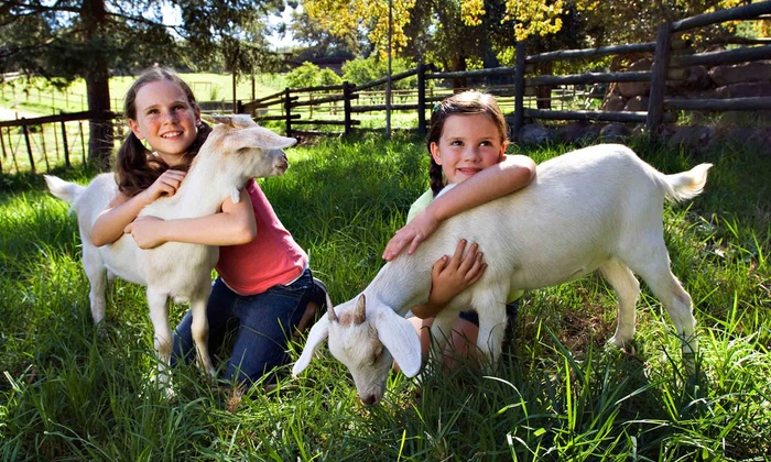 Green Meadows Farm - Kissimmee: Petting-Farm Visit for One or Two at Green Meadows Farm (Up to 44% Off)