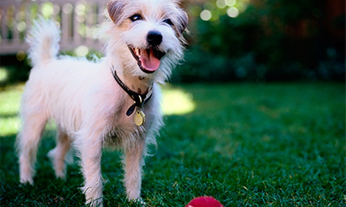 HarlemDoggieDaySpa - Harlem: Two Days of Doggie Daycare or One Night of Boarding for a Small or Large Dog at HarlemDoggieDaySpa (Up to 57% Off)
