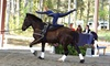 Up to 50% Off Equestrian Vaulting Lessons