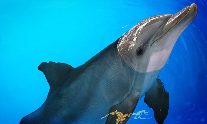 Clearwater Marine Aquarium - Clearwater: Clearwater Marine Aquarium Visit, Membership, Animal Adoption, Camp, Party, or Boat Tour (Up to 43% Off)