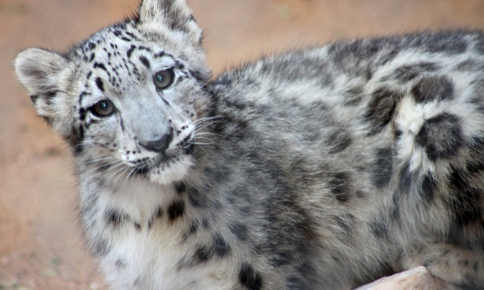 Micke Grove Zoological Society - San Francisco: $49 for a Friends Membership to the Micke Grove Zoological Society ($100 Value)