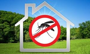 DISinFESTA: Disinfestazione zanzare, derattizzazione o deblattizzazione (sconto fino a 72%)
