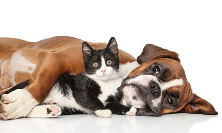 Two Sets of Kitten or Puppy Vaccines and Exam at Sheridan West Animal Clinic (Up to 85% Off)
