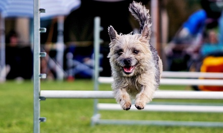 Two Adult or Child Tickets to the Philadelphia Family Pet Show on January 9–11 (50% Off)