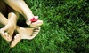 Lawn & Tick Services: $99 for Fall Lawn Aeration, Seeding, and Fertilization from Lawn & Tick Services ($360 Value)