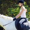 Up to 70% Off Horseback-Riding Lessons in Hornby