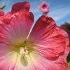 Up to 51% Off Membership to UBC Botanical Garden