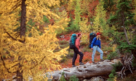 Full-Day Basic Bushcraft Skills or Nomad Course for One or Two with Forest Bushcraft (54% Off)