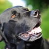 Up to 64% Off Dog Daycare at Hounds on the Hudson