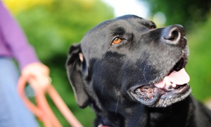 Hounds on the Hudson: Two or Five Days of Dog Daycare at Hounds on the Hudson (Up to 64% Off)