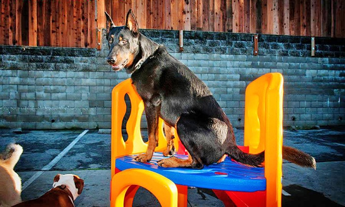 Citipets - Bayview: One or Three Days of Dog Daycare or One or Three Nights of Dog Boarding at Citipets (Up to 52% Off)