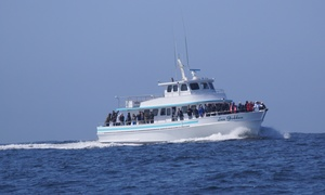 Up To 24% Off Whale Watching At Sea Goddess Whale Watching
