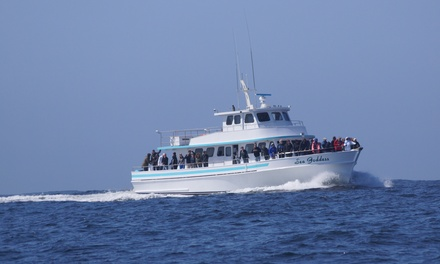 Up to 43% Off Whale Watching at Sea Goddess Whale Watching